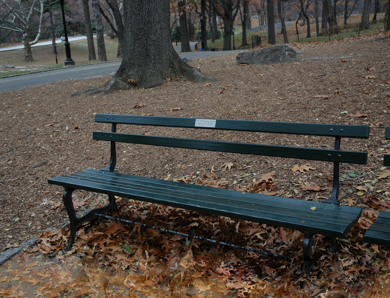 B&B bench in Central Park, surrounded by naked trees and fallen leaves